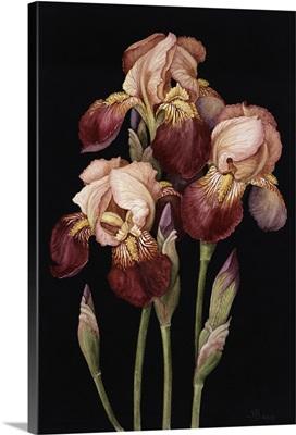 Irises, 2004