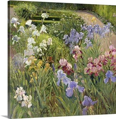 Irises at Bedfield