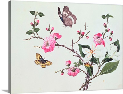 Japonica, Magnolia and Butterflies