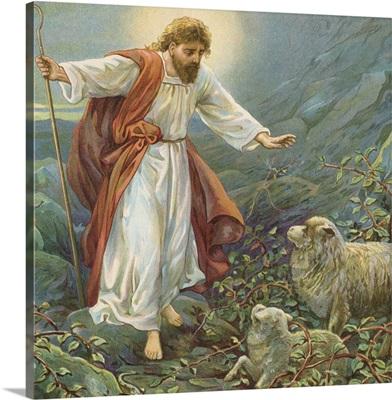 Jesus Christ, the tender shepherd