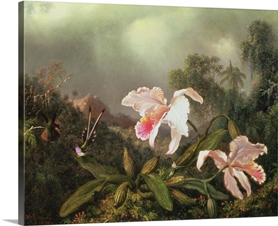 Jungle orchids and hummingbirds, 1872