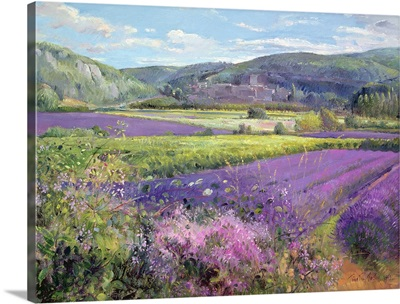 Lavender Fields in Old Provence