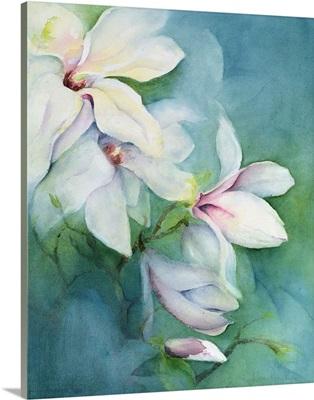 Magnolia Dedudata