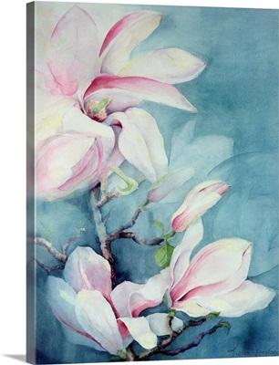 Magnolia Soulangeana (vertical)