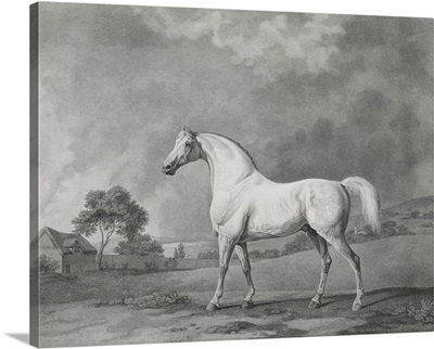 Mambrino, engraved by George Townley Stubbs  pub. 1794