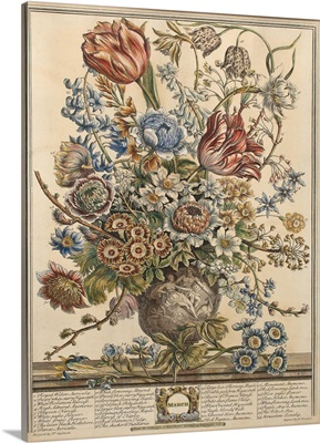 March, from Twelve Months of Flowers by Robert Furber engraved by Henry Fletcher