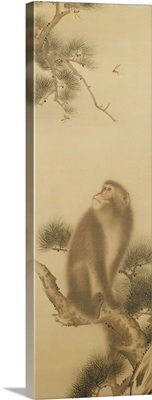 Monkey watching a dragonfly