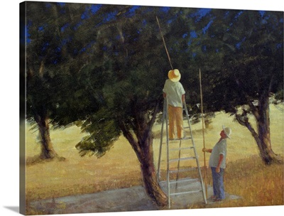 Olive Pickers, 1985