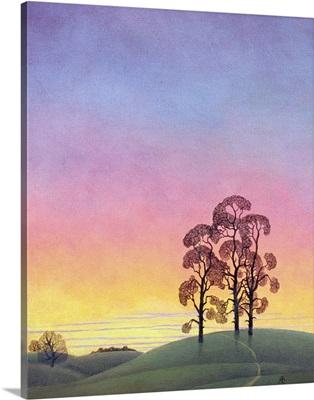 Path through the Pines, 2004