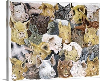 Pigs Galore