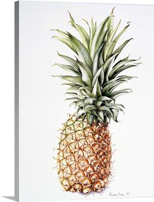 Pineapple, 1997