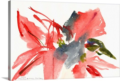 Poinsettia, 2003