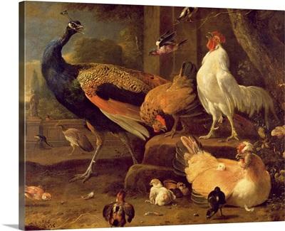 Poultry, c.1670