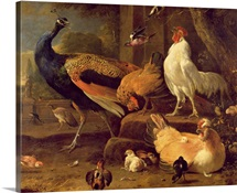 Poultry, c.1670 (oil on canvas)