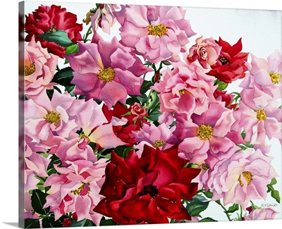 Red and Pink Roses, 2008
