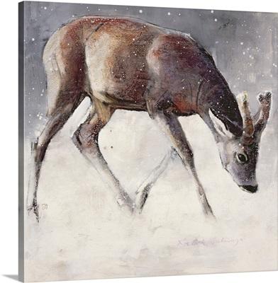 Roe Buck, Winter, 2000