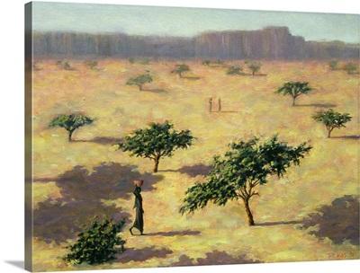 Sahelian Landscape, Mali, 1991
