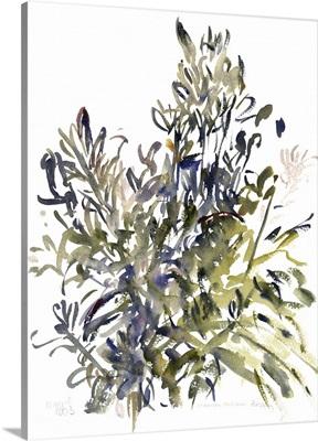 Senecio and Other Plants, 2003