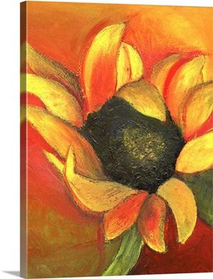 September Sunflower, 2011