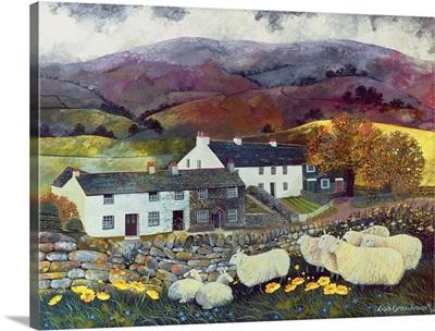 Sheep Country, 1988