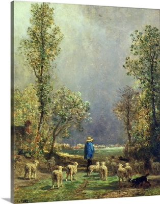 Sheep watching a Storm