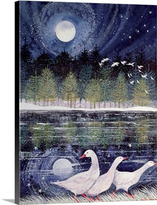 Snow Geese, 1995