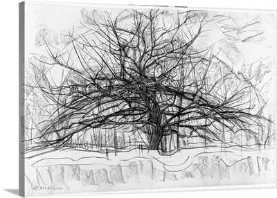 Study For The Grey Tree