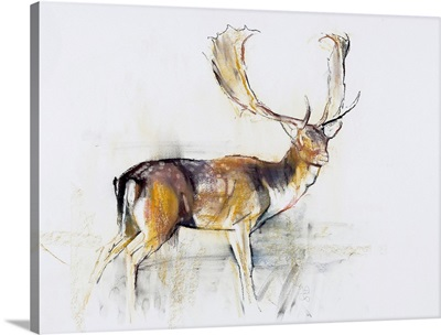 Study of a Stag