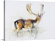 Study of a Stag (charcoal