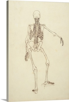 Study of the Human Figure, Posterior View