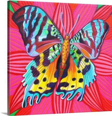 Sunset Moth, 2014