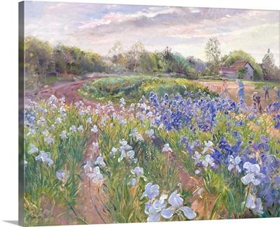 Sunsparkle on Irises, 1996