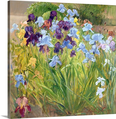 The Iris Bed, Bedfield, 1996