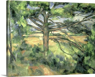 The Large Pine, 1895 97