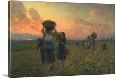 The Last Gleanings, 1895