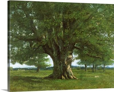 The Oak of Flagey, called Vercingetorix