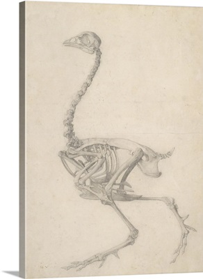 The Skeleton of a Fowl