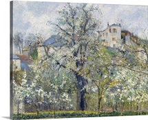 The Vegetable Garden with Trees in Blossom, Spring, Pontoise, 1877 (oil on canvas)