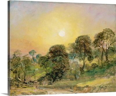Trees on Hampstead Heath at Sunset