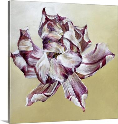 Tulipa, 2013