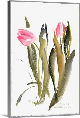 Tulips, 2003