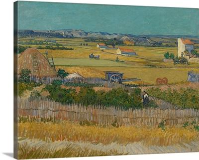 Wheatfields