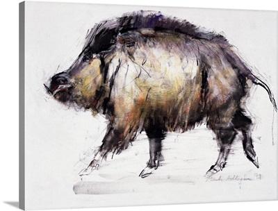 Wild Boar, 1999
