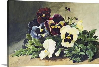Winter Pansies, 1884