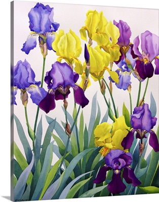 Yellow and Purple Irises