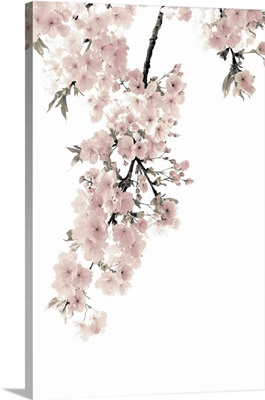 Pink Blossoms on White II