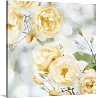 Yellow Rose Garden I