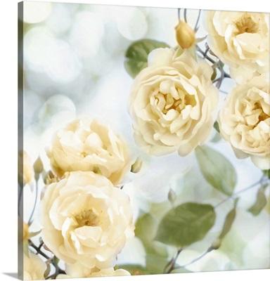 Yellow Rose Garden II