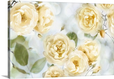 Yellow Rose Garden III