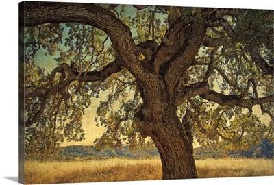 Blue Oak Silhouette